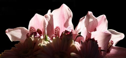 Fleurs-PhotoGuyDieppedalle